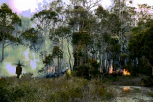 Bushfire Management Plans